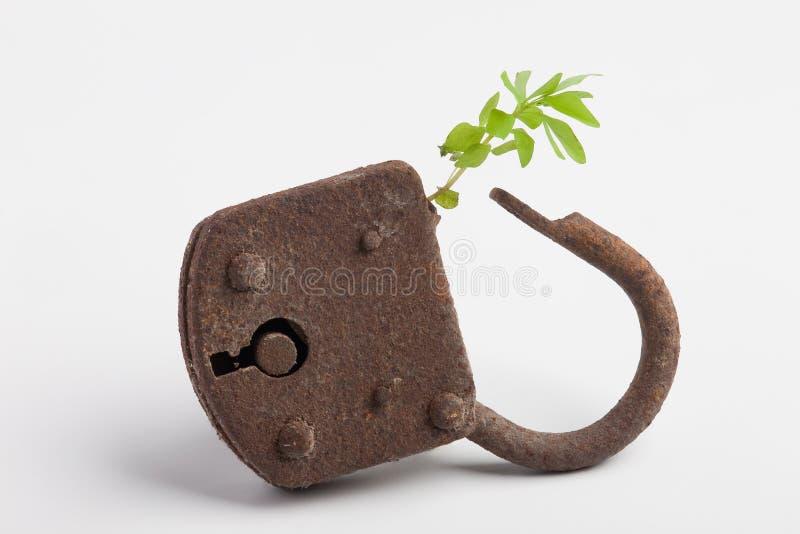 κλειδωμένο φυτό στοκ εικόνες με δικαίωμα ελεύθερης χρήσης