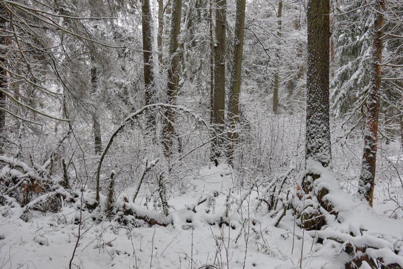 Κλιματιστικό τοπίο χιονισμένης στεγανής βάσης στοκ φωτογραφία