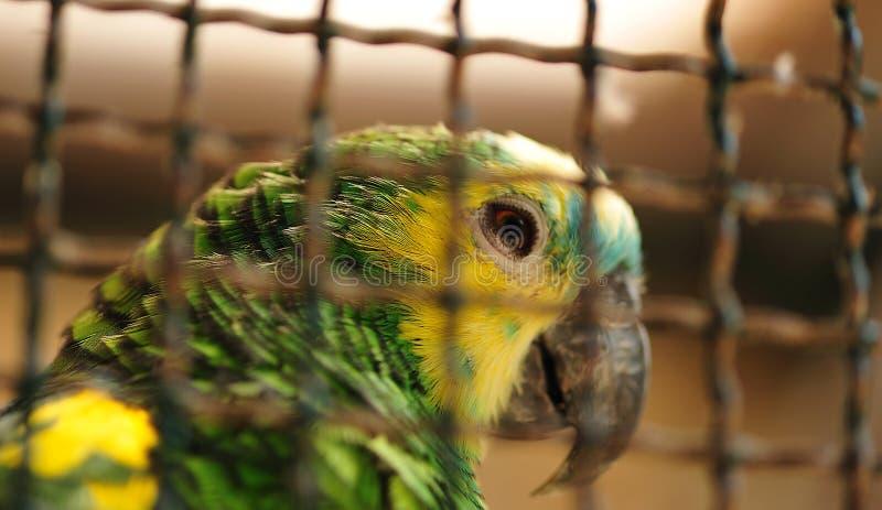 κλουβιά ζώων στοκ εικόνες με δικαίωμα ελεύθερης χρήσης