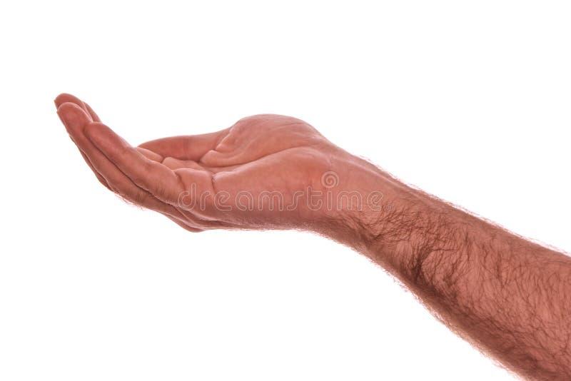 κοίλο χέρι στοκ εικόνες με δικαίωμα ελεύθερης χρήσης