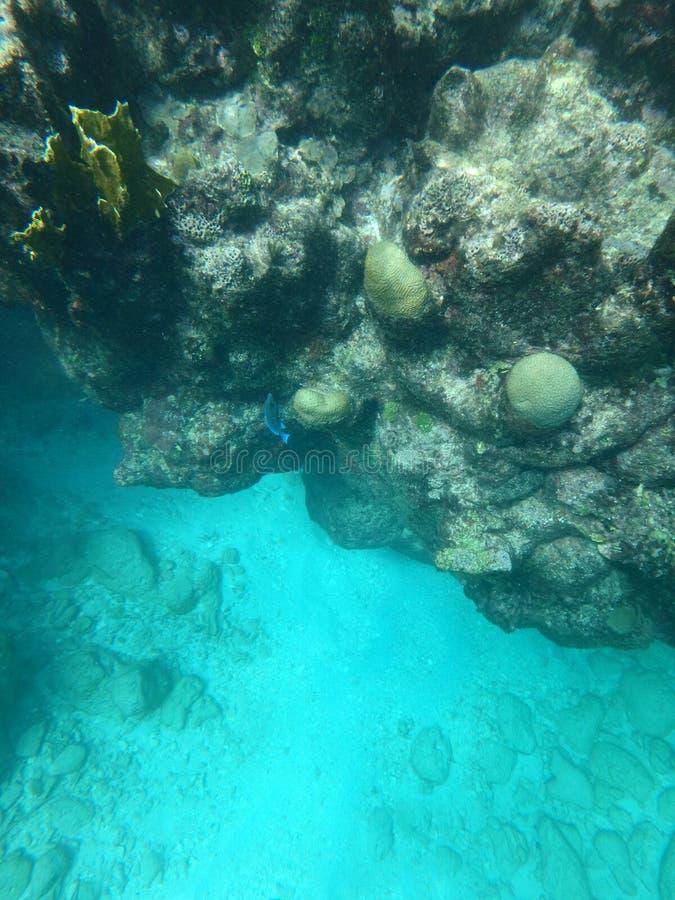 Κοίταγμα κάτω από μετά από το κοράλλι στοκ εικόνες