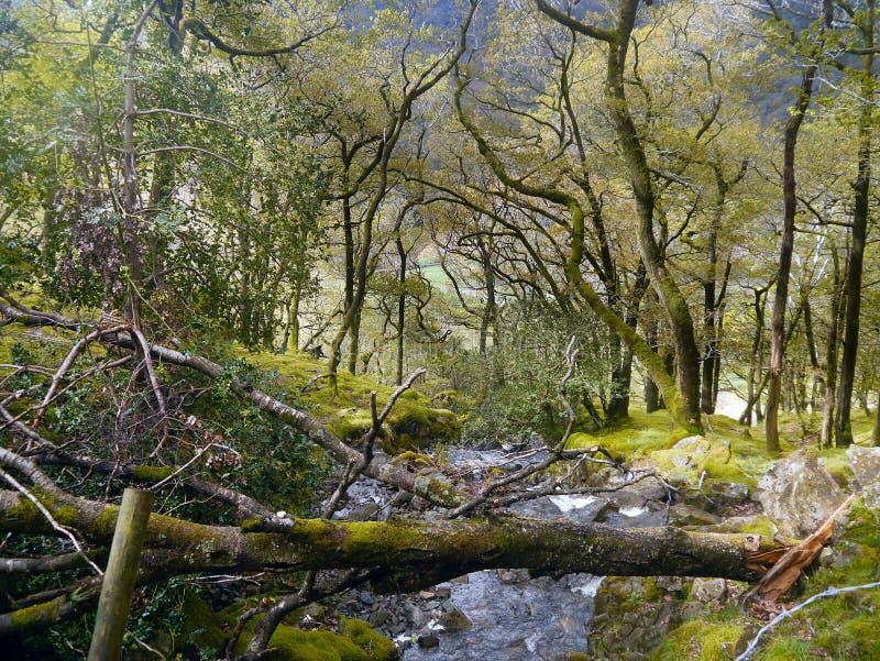 Κοίταγμα κάτω από το ρεύμα με το πεσμένο δέντρο πέρα από το στοκ φωτογραφίες