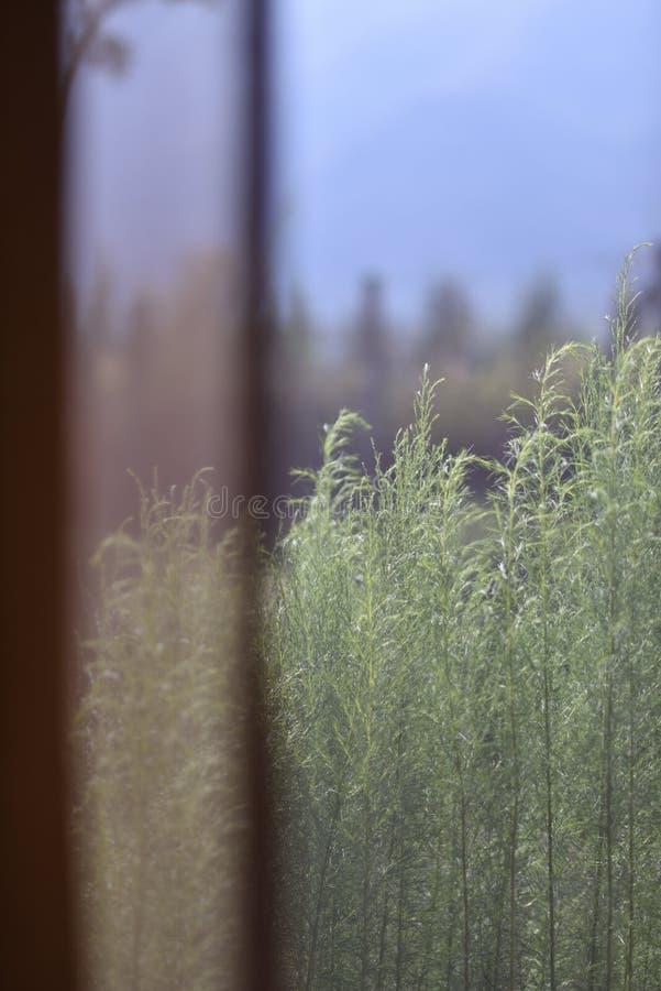 Κοίταγμα μέσω μιας διάφανης κουρτίνας σε ένα σύγχρονο θέρετρο στοκ εικόνες