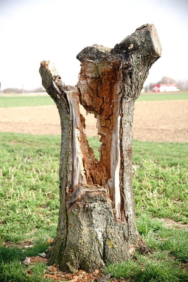 κοίλο δέντρο στοκ εικόνες