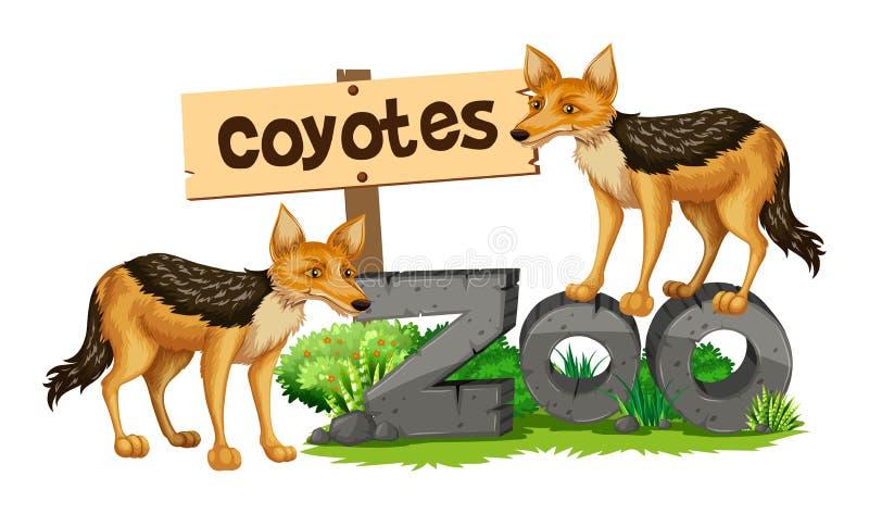 Κογιότ στο σημάδι ζωολογικών κήπων διανυσματική απεικόνιση