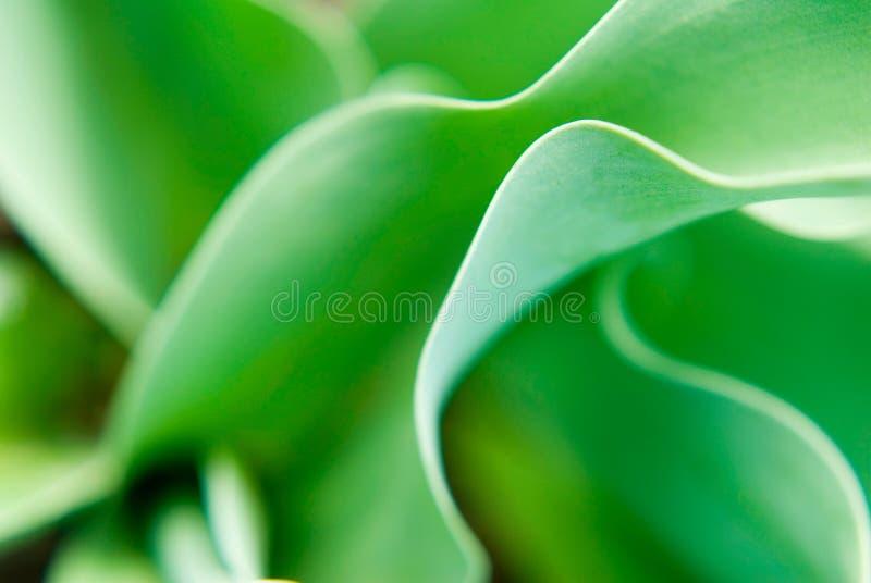 Download κοιλάδα κρίνων στοκ εικόνες. εικόνα από φύση, μακροεντολή - 2229528