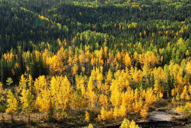κοιλάδα ποταμών δασών στοκ εικόνα