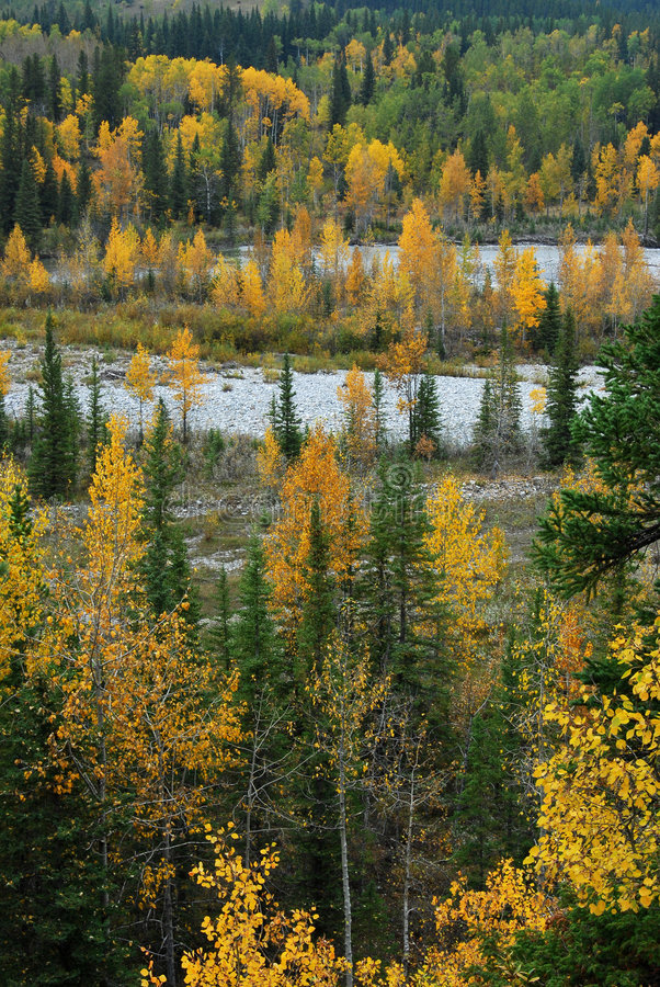 κοιλάδα ποταμών δασών στοκ εικόνες με δικαίωμα ελεύθερης χρήσης