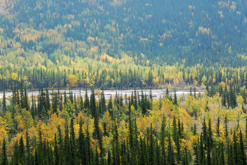 κοιλάδα ποταμών δασών στοκ φωτογραφία με δικαίωμα ελεύθερης χρήσης