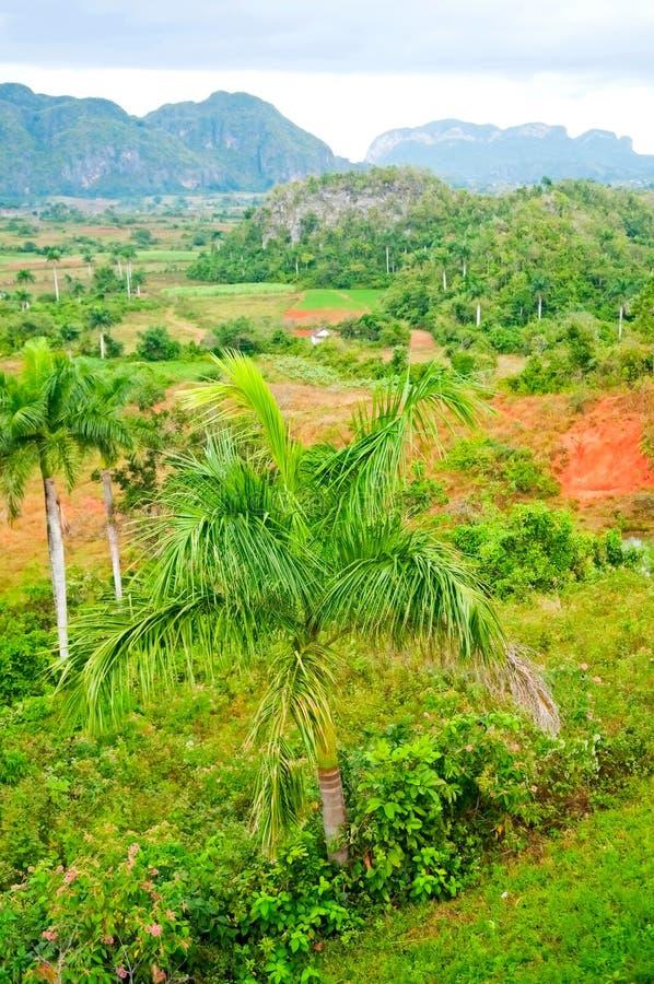 κοιλάδα vinales στοκ φωτογραφία με δικαίωμα ελεύθερης χρήσης