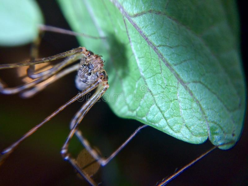Κοινή αράχνη στοκ εικόνα