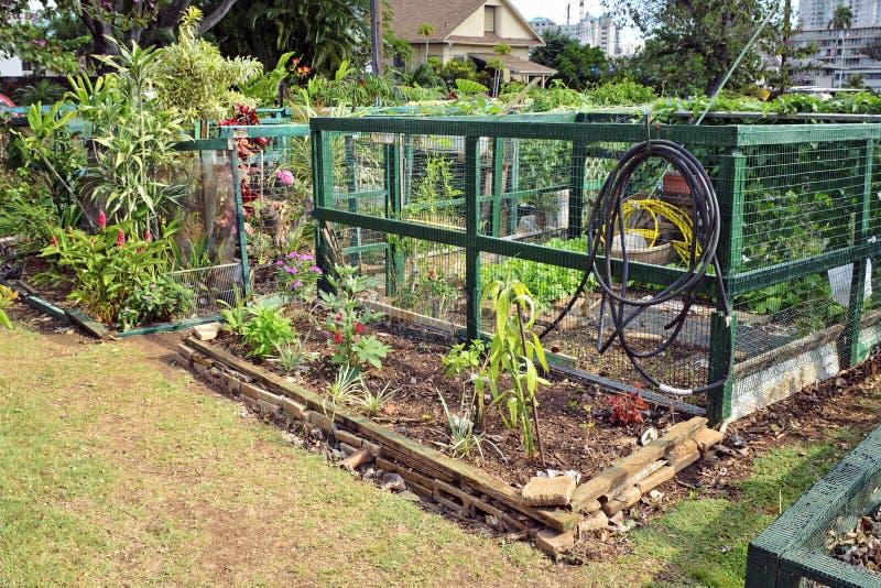 κοινοτικοί κήποι στοκ εικόνες με δικαίωμα ελεύθερης χρήσης