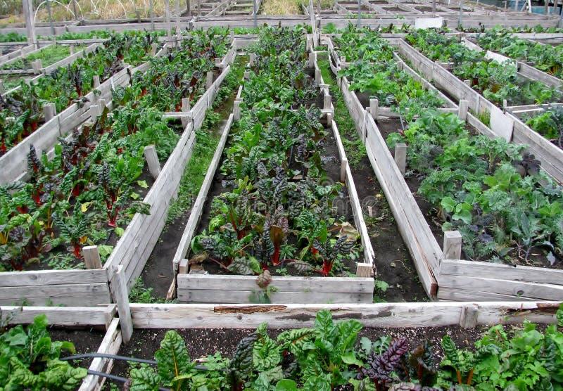 Κοινοτικός φυτικός κήπος στοκ φωτογραφίες με δικαίωμα ελεύθερης χρήσης