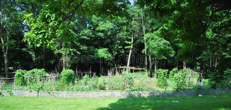 Κοινοτικός φυτικός κήπος στοκ φωτογραφία με δικαίωμα ελεύθερης χρήσης