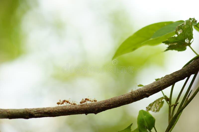 Κοινωνικό δίκτυο μυρμηγκιών στοκ εικόνες