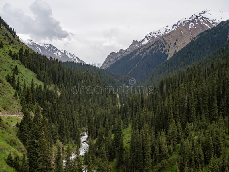 Κοιλάδα βουνών που καλύπτεται με τα δέντρα πεύκων, στο χιόνι υποβάθρου στοκ εικόνες με δικαίωμα ελεύθερης χρήσης