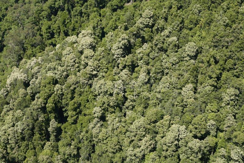 Κοιλάδα καγκουρό στοκ φωτογραφία