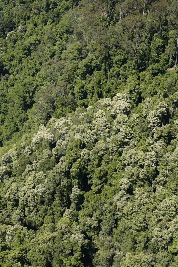 Κοιλάδα καγκουρό στοκ εικόνες