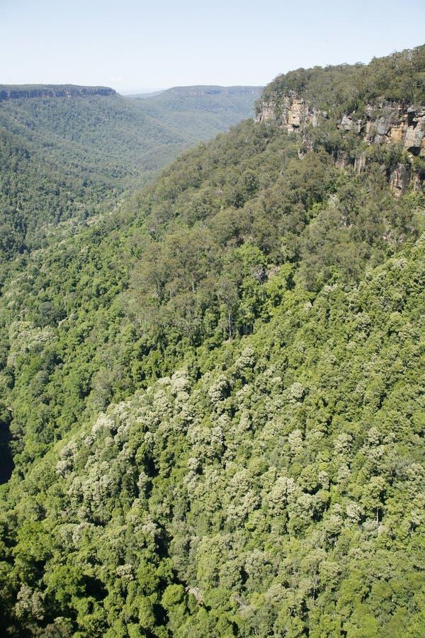 Κοιλάδα καγκουρό στοκ εικόνες με δικαίωμα ελεύθερης χρήσης