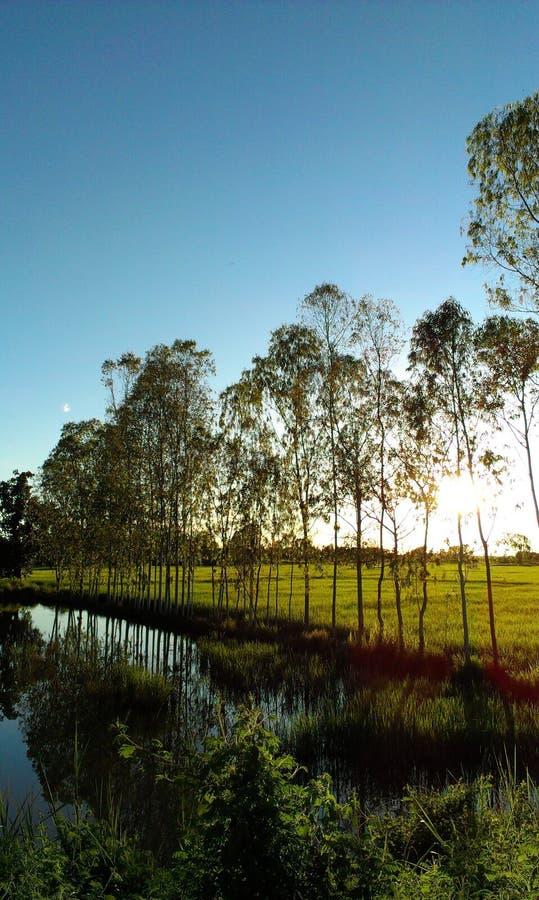 Κοιλάδα φυτειών τσαγιού στο δραματικό ρόδινο ουρανό ηλιοβασιλέματος σε Tà ¹ ‰ hailand στοκ φωτογραφία με δικαίωμα ελεύθερης χρήσης