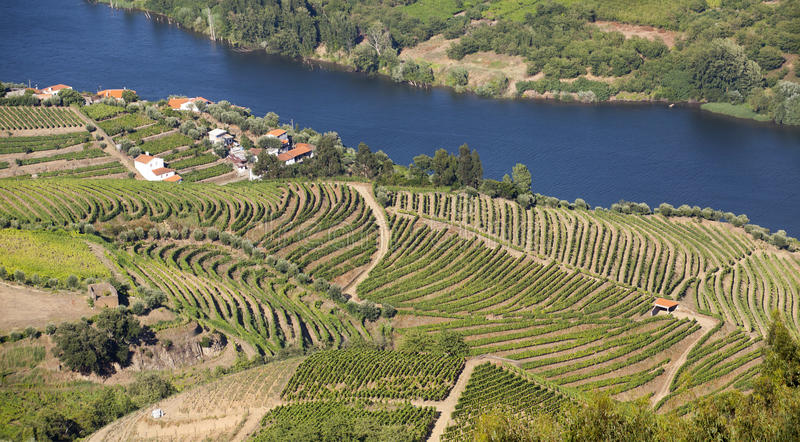 Κοιλάδα Douro στοκ φωτογραφίες