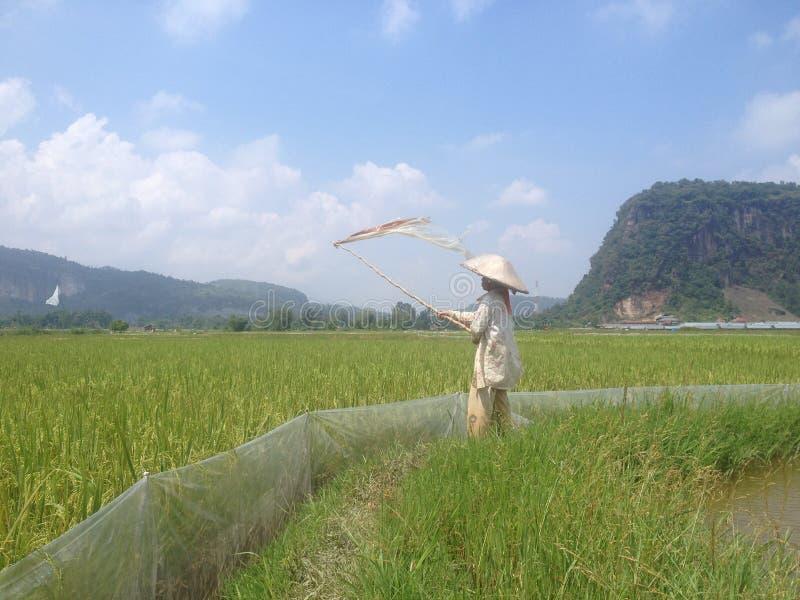 Κοιλάδα Harau στοκ φωτογραφία
