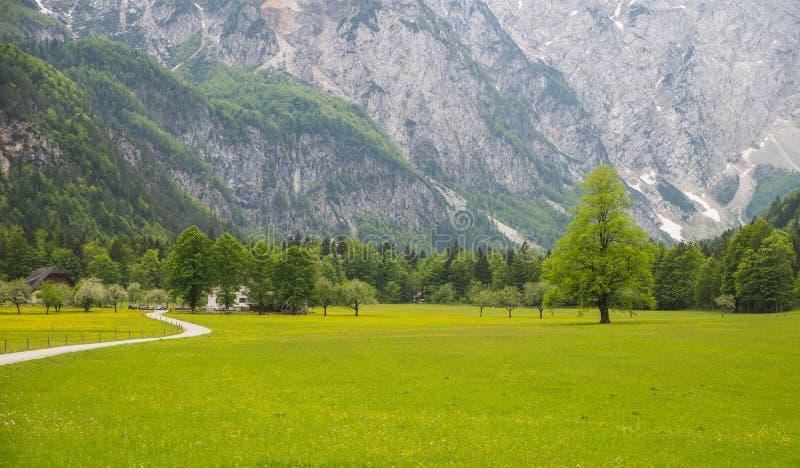 Κοιλάδα Logarska dolina/Logar, Σλοβενία στοκ φωτογραφίες με δικαίωμα ελεύθερης χρήσης