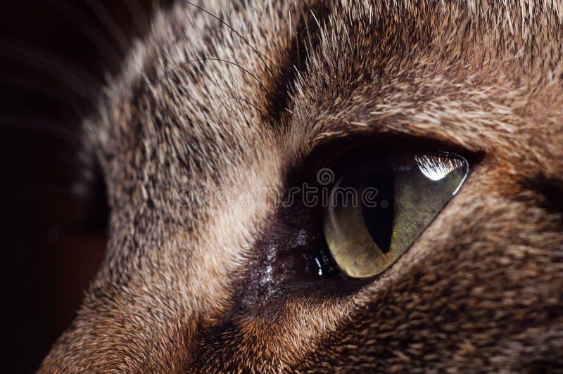 κοκκινίστε μάτια S Στοκ Φωτογραφία