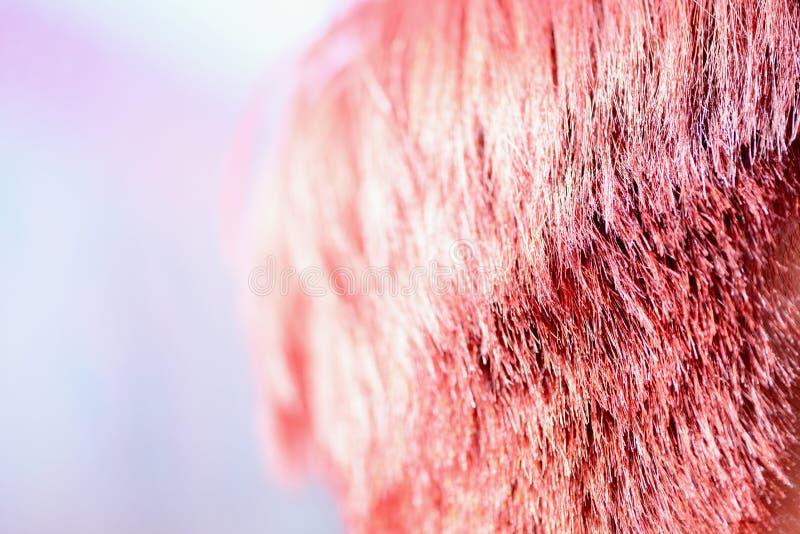 Κοκκινωπή χρωστική ουσία τρίχας στο φως του ήλιου στοκ εικόνες