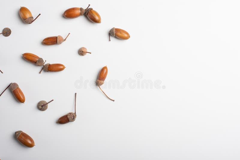 Κολάζ βελανιδιών Επίπεδος βάλτε την ελάχιστη έννοια πτώσης φθινοπώρου στοκ φωτογραφίες