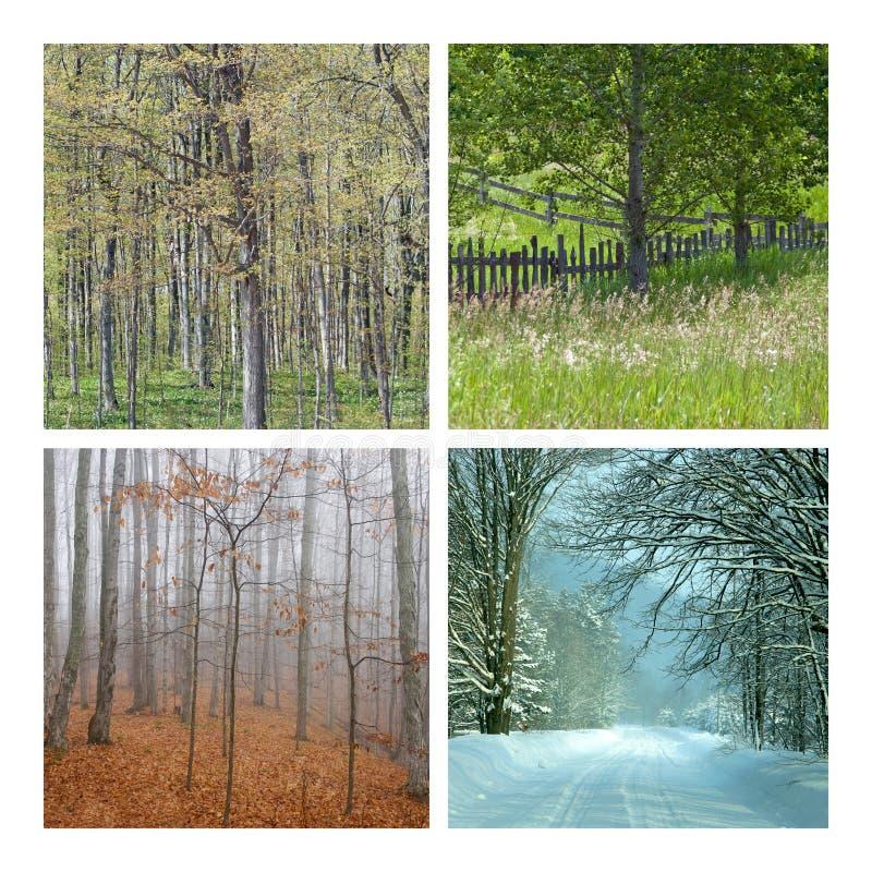 κολάζ τέσσερα εποχές φύση& στοκ εικόνα
