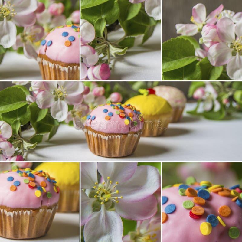 Κολάζ του cupcake με τους ανθίζοντας κλάδους μήλων στοκ φωτογραφίες με δικαίωμα ελεύθερης χρήσης