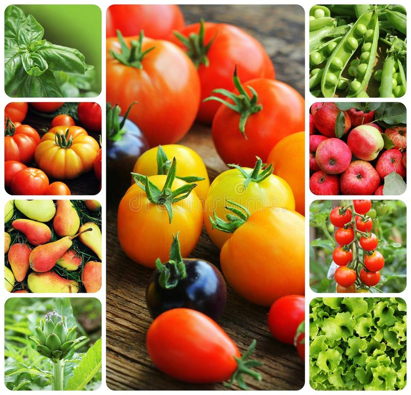 Κολάζ των λαχανικών και των φρούτων - προϊόντα του φυτικού κήπου Υγιής έννοια κατανάλωσης κηπουρική ανασκόπησης στοκ εικόνα