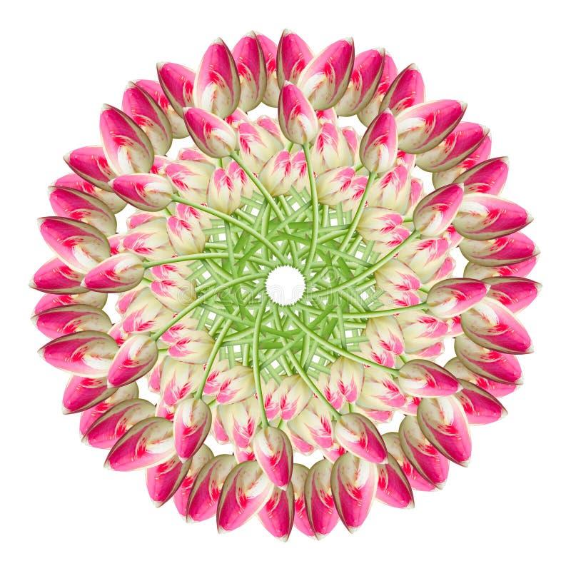 Κολάζ των ρόδινων όμορφων λουλουδιών τουλιπών σε ένα άσπρο υπόβαθρο στοκ φωτογραφίες