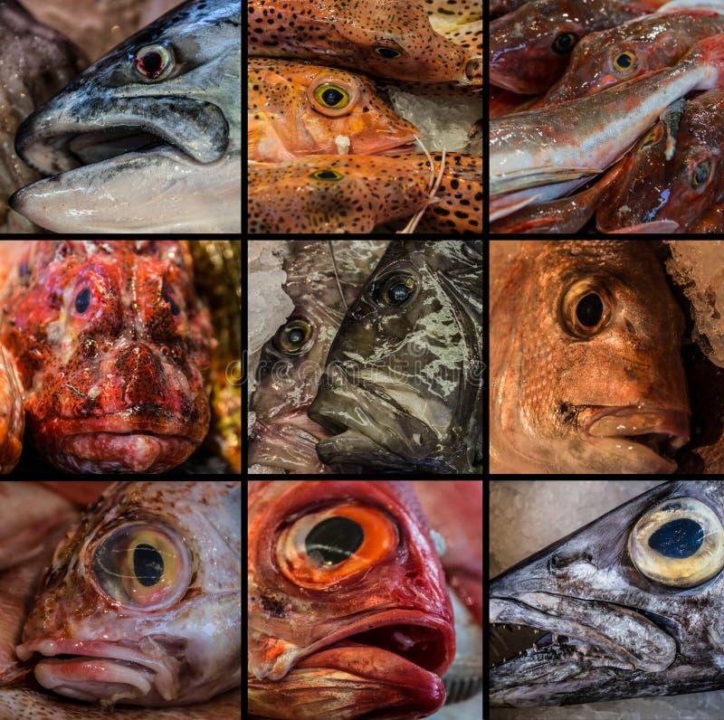 Κολάζ των ψαριών που πωλείται στην αγορά ψαριών του Ώκλαντ στοκ εικόνες με δικαίωμα ελεύθερης χρήσης