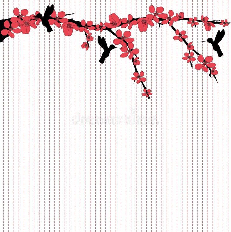 Κολίβρια που πετούν γύρω από το άνθος κερασιών ελεύθερη απεικόνιση δικαιώματος