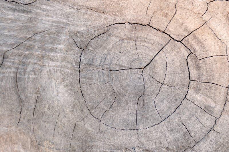 κολοβώματα δέντρων και καταρριφθείσα δασική περίληψη αποδάσωσης για το υπόβαθρο στοκ εικόνα με δικαίωμα ελεύθερης χρήσης