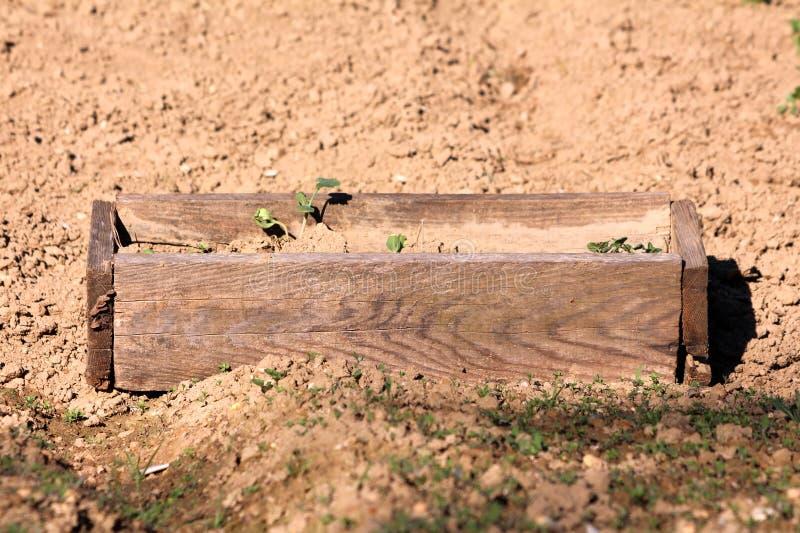Κολοκυθιών ή κολοκυθιών ή μωρών θερινή κολοκύνθη ποικιλιών κολοκυθιού λεπτή ξεφλουδισμένη που φυτεύεται στο αυτοσχεδιασμένο ξύλιν στοκ εικόνα