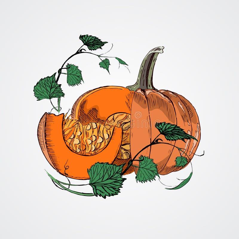 Κολοκύθες Doodle Διανυσματική συρμένη χέρι εικόνα χρωμάτων στο ύφος κινούμενων σχεδίων διανυσματική απεικόνιση