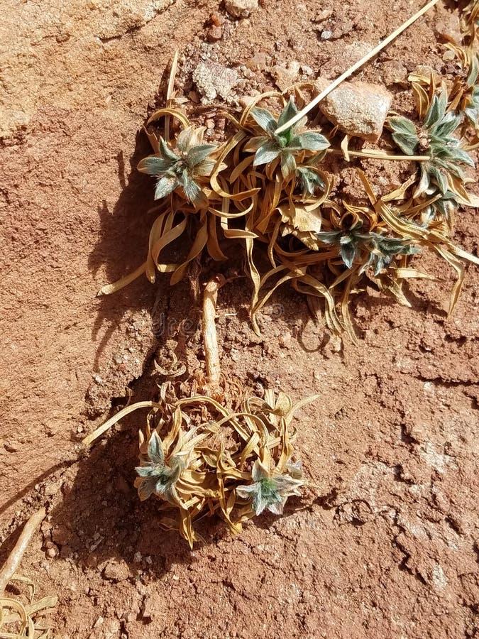 Κολοράντο Succulent στοκ φωτογραφίες με δικαίωμα ελεύθερης χρήσης