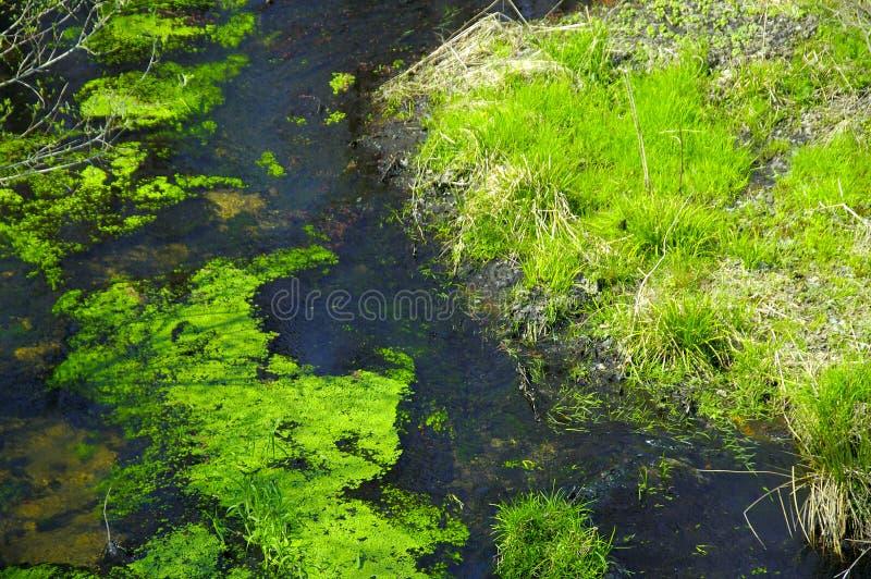 Download κολπίσκος στάσιμος στοκ εικόνα. εικόνα από ύδωρ, λίμνη - 108747
