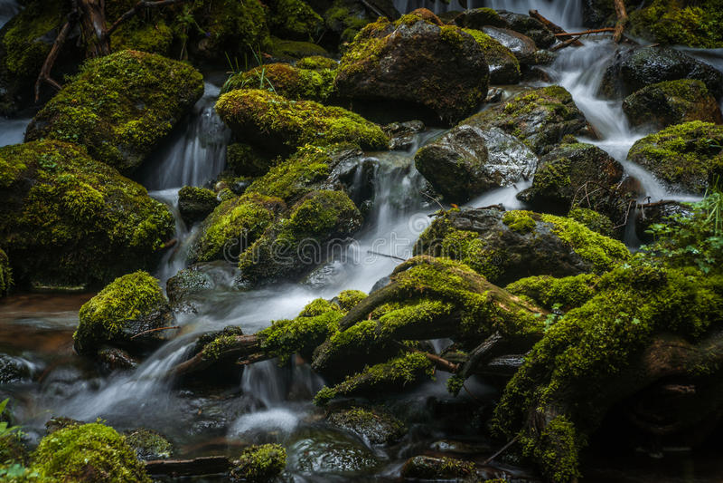 κολπίσκος mossy στοκ εικόνες με δικαίωμα ελεύθερης χρήσης