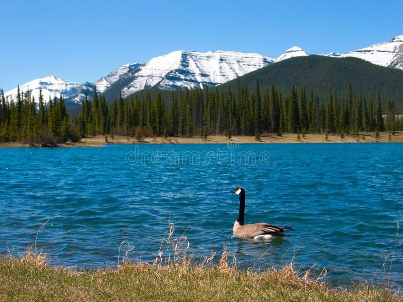 κολυμβητής βουνών στοκ εικόνα