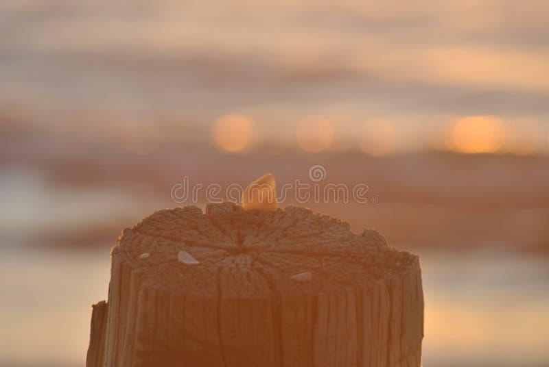 Κολόβωμα και κοχύλι μώλων στοκ φωτογραφία με δικαίωμα ελεύθερης χρήσης