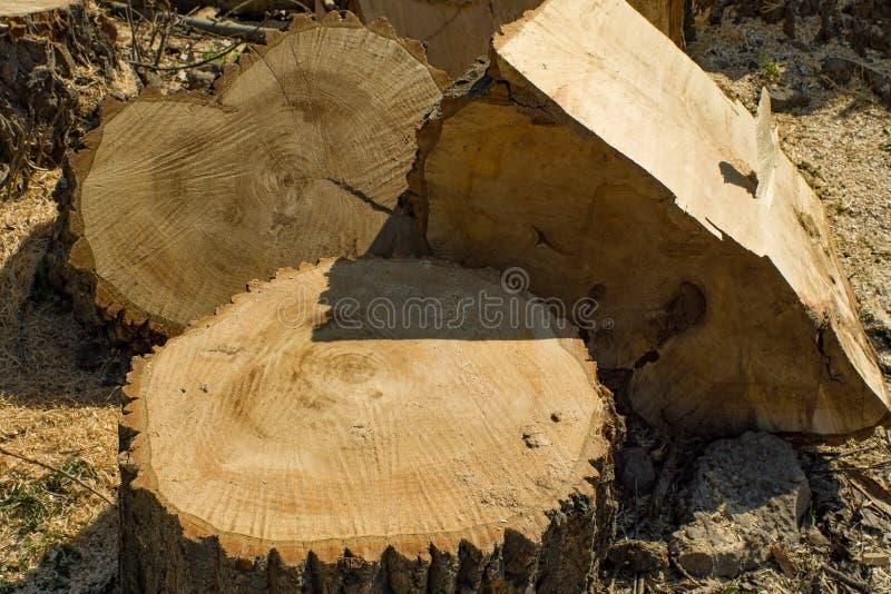 Κολόβωμα και συσσωρευμένα κομμάτια του καταρριφθε'ντος ξύλου Η έννοια της καταστροφής των δασών και των δέντρων στοκ φωτογραφία