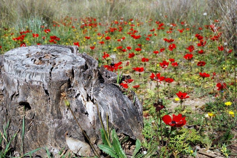 κολόβωμα λουλουδιών στοκ εικόνα