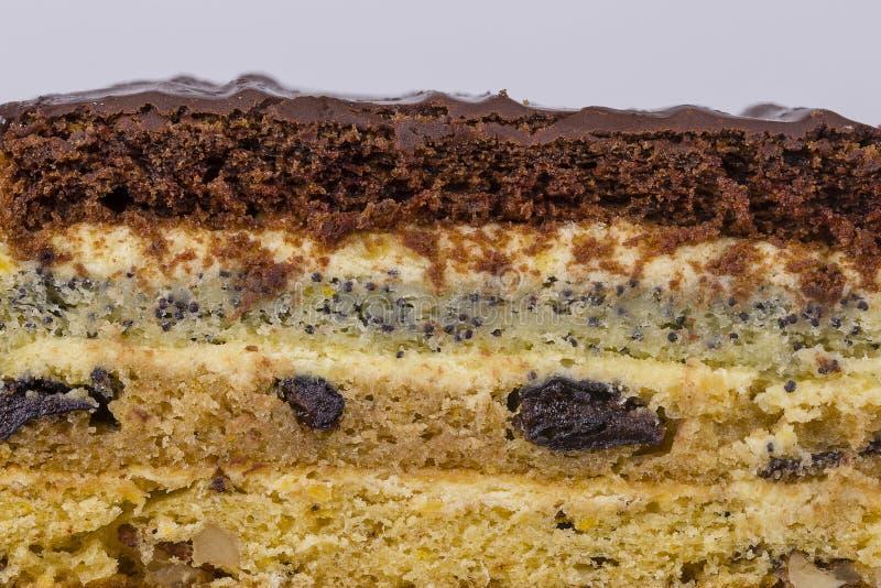 Κομμάτι σοκολάτας του κέικ από τη ζύμη μπισκότων με το σπόρο, το δαμάσκηνο και τα ξύλα καρυδιάς παπαρουνών στοκ φωτογραφίες με δικαίωμα ελεύθερης χρήσης