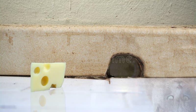 Κομμάτι του τυριού και της γάτας που απεικονίζονται στο πάτωμα μπροστά από mou στοκ φωτογραφίες