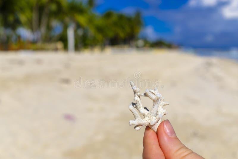 Κομμάτι Smal του κοραλλιού στοκ εικόνα