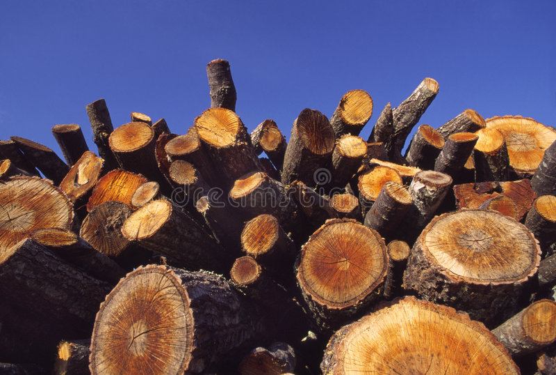 Download κομμένο δάσος στοιβών στοκ εικόνες. εικόνα από βακκινίων - 2231794